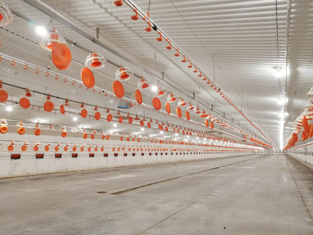 LED lighting installation for poultry in Poland
