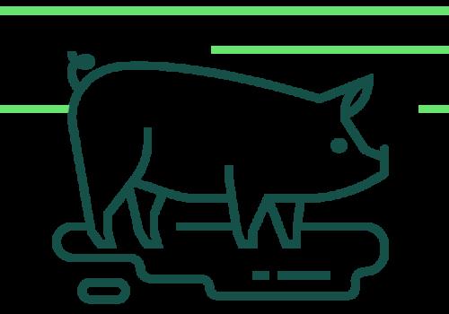 Greengage-Icons_Swine-2