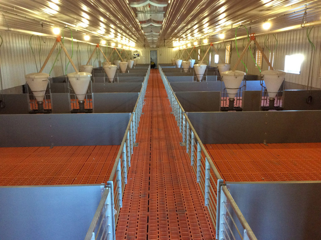 LED lighting and sensors for pig farming