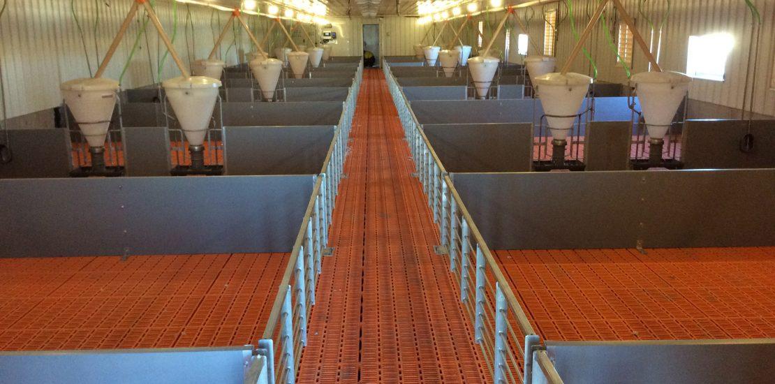 LED lighting for pig farm
